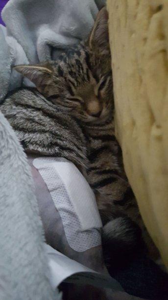 Kitten-07