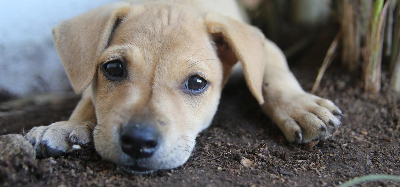 Story of a stray dog