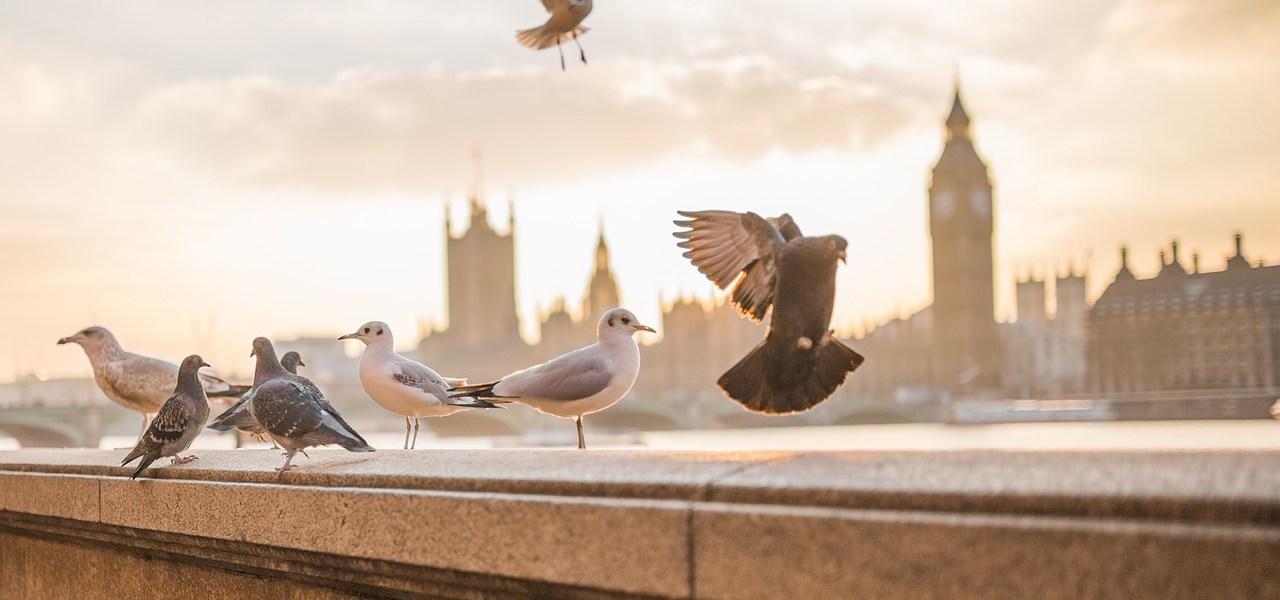 Birds of Prey- Poem on Birds
