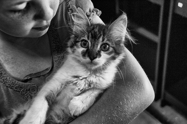Girl with kitty, Happiness in Cherishing Differences
