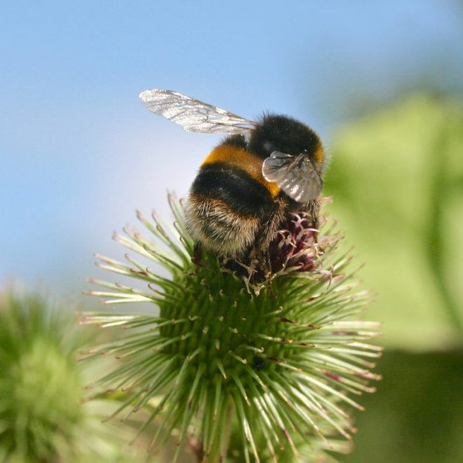 Cutest Pictures of Bees on the Internet