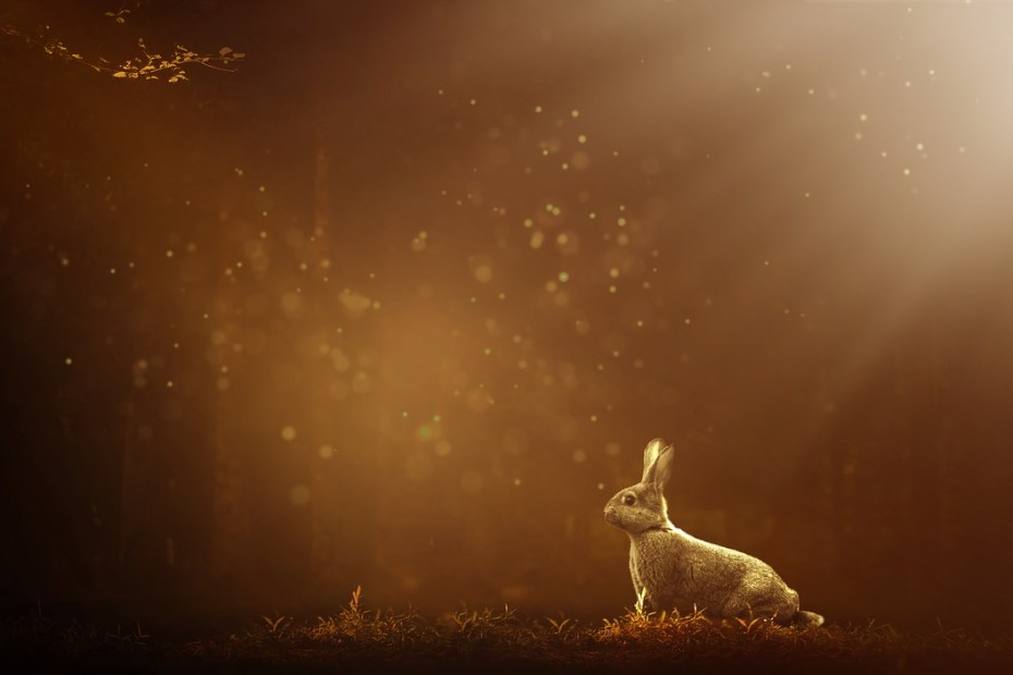 An Ode to my beloved Pet: My Scared Bunny now Gently Sleeps, Poem on Loss of Pet