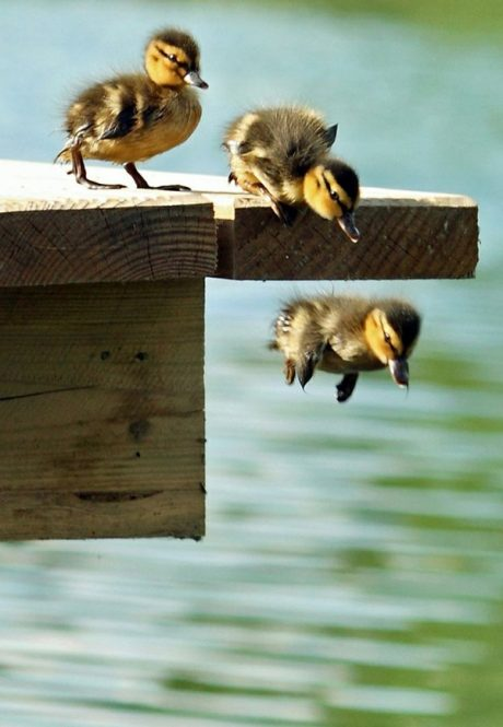 Naughty Duckling Pictures