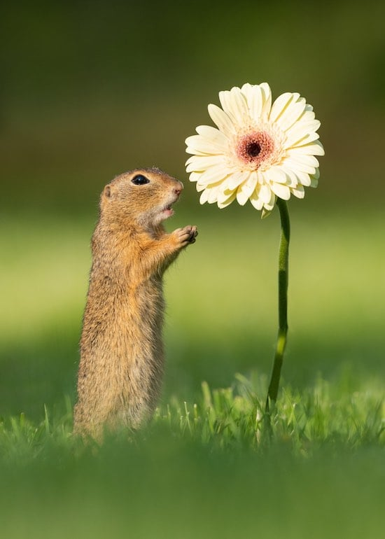 Surprised Squirrel looking at a flower