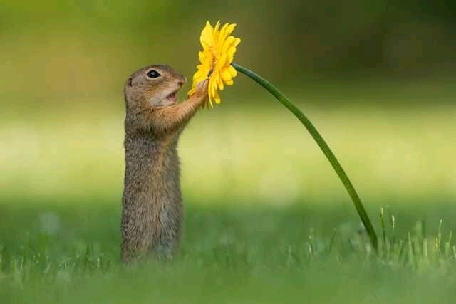 Squirrel touching a flowers, Cute Squirrel Pictures