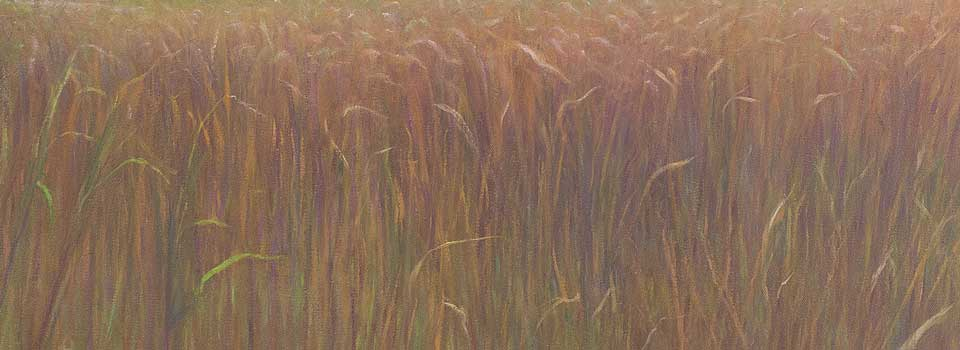 Moor Grass, homepage slideshow