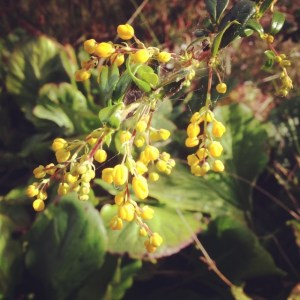 A spray of small yellow flowers.