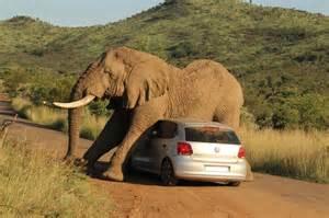 Grijze Auto voor de kleuren Auto Bingo! Een super grappig plaatje van een grijze olifant op een grijze auto. Als Grijze auto bestuurder ben je Maar behalve dat, ben je ook erg nuchter en toegewijd aan je werk: grijs staat voor veilig, bescheiden en duurzaam. Mels Feestje & Zomervakantie