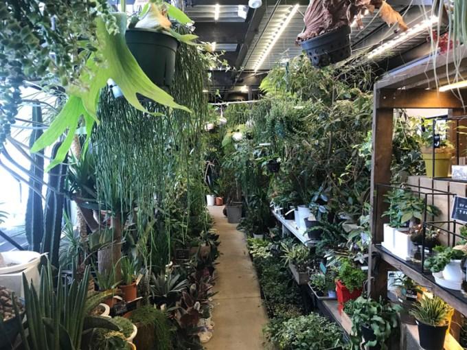 観葉植物のお店