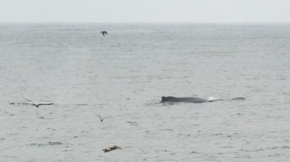whale in the bay