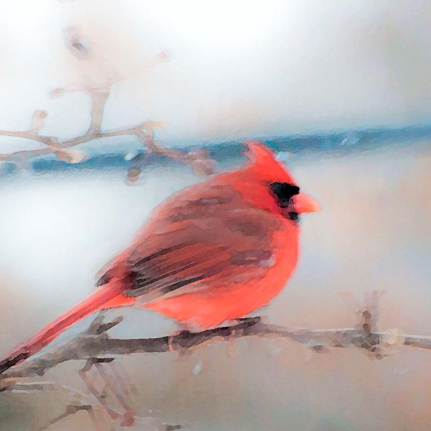 cardinal.jpg?fit=880%2C880&ssl=1