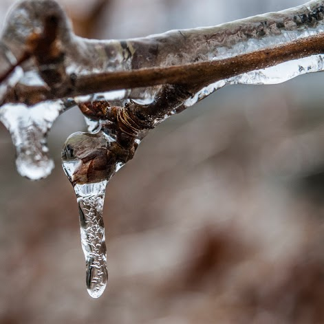 icedrop.jpg?fit=471%2C471