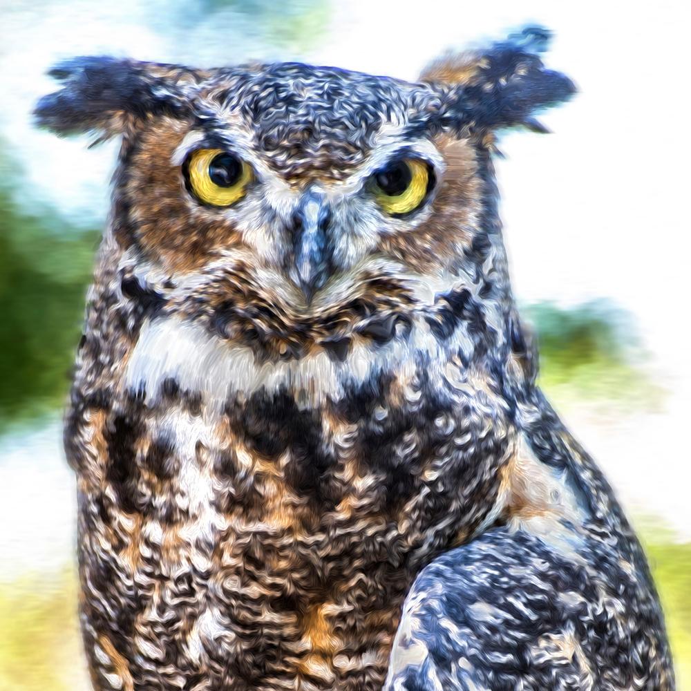 owl.jpg?fit=1000%2C1000