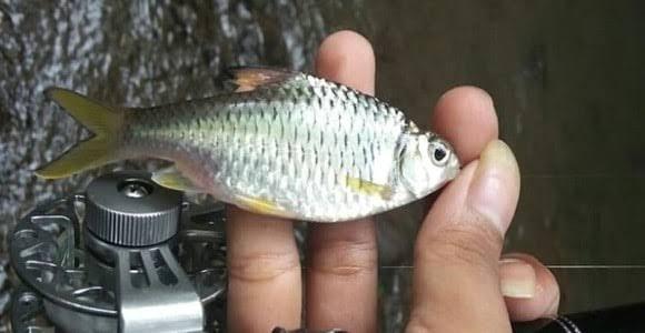 Tips mancing ikan di sungai