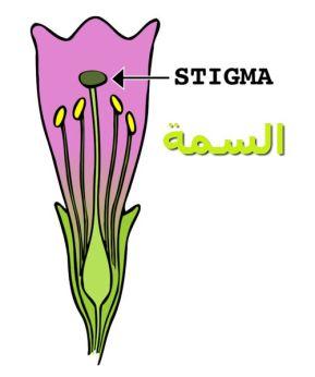 Stigma_السمة