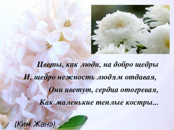 """Картинки """"Красивые цветы со смыслом"""" (51 фото)   Memax"""