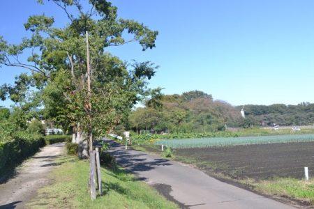 見沼代用水沿い