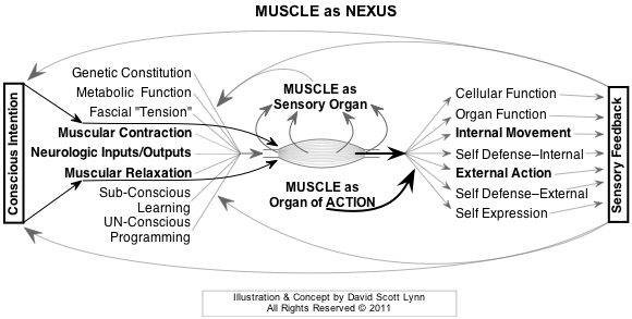 muscle as NEXUS between internal & external reality - mindful medical massage - structural bodywork