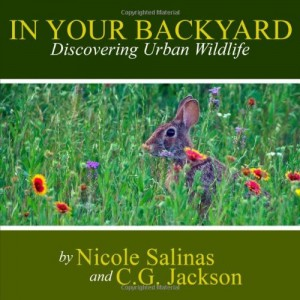 CJJackson_In_Your_Backyard