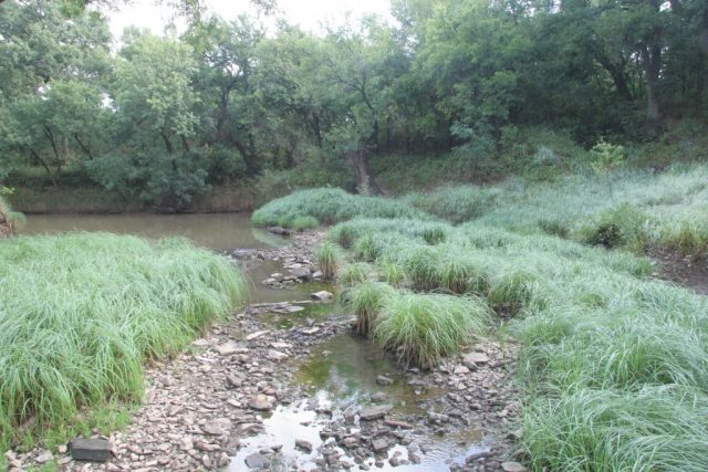 Trinity River Riparian Zone