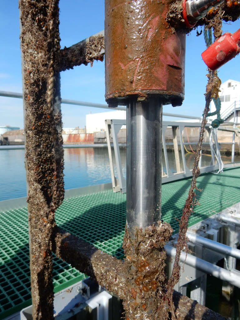 Corrosion-resistant coating that halved the build-up of algae and barnacles. Credit: Defence Science Technology
