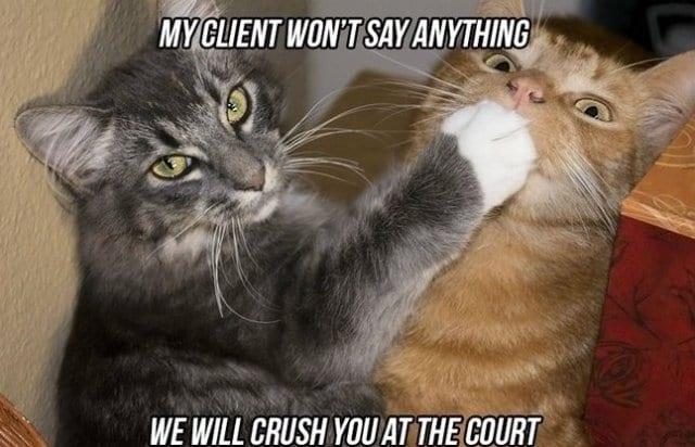 Afbeeldingsresultaat voor right to remain silent funny cat