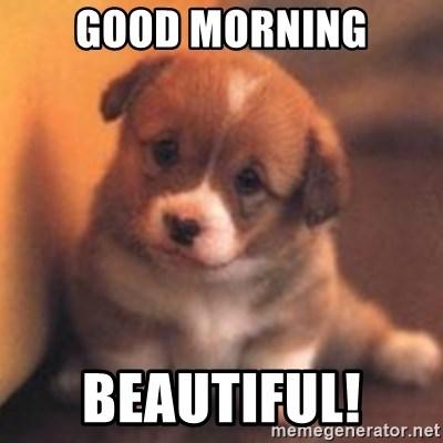 GOOD MORNING BEAUTIFUL! - cute puppy | Meme Generator