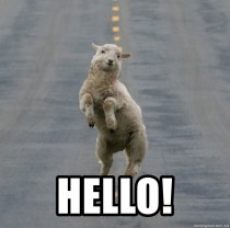 Excited Sheep - hello!