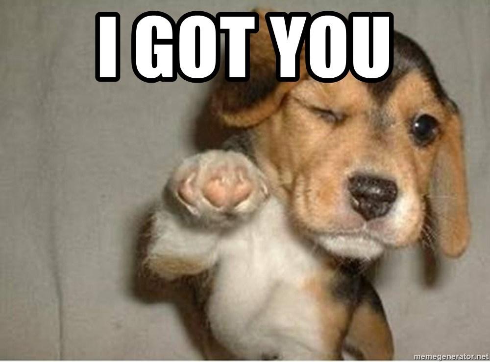 i got you - pointing beagle | Meme Generator