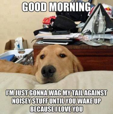 wpid-1-dog-meme-9-wag-tail-facebook.jpg