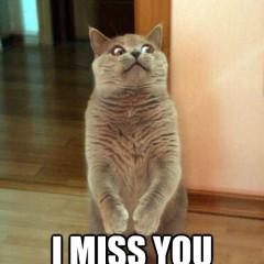 http://catplanet.org/wp-content/uploads/2014/08/Dear-Panda-I-miss-you-already-240x240.jpg