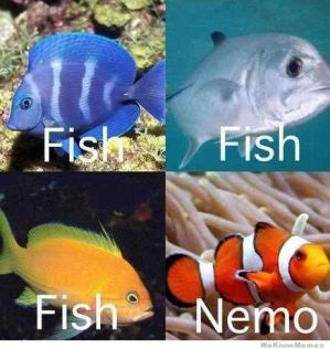 wpid-how-i-see-fish-nemo.jpg