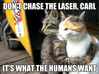 http://weknowmemes.com/wp-content/uploads/2012/05/restraining-cat-meme.jpg