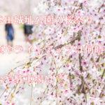 新発田城址公園の桜祭りの見頃やライトアップは何時?屋台や駐車場は?