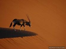 Oryx gazella in the Dunes of Sossusvlei