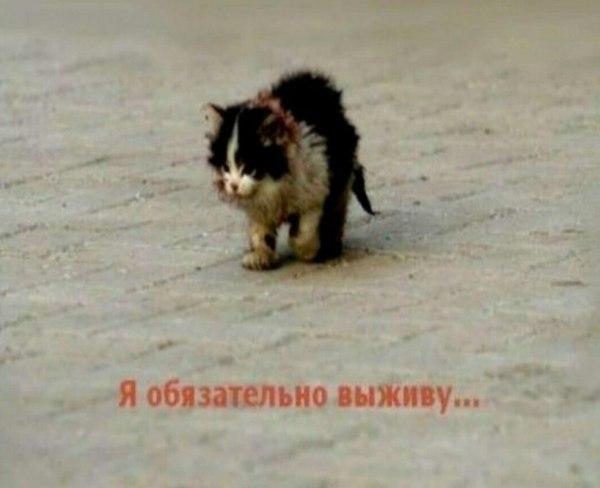 Я обязательно выживу - что за мем с котенком на дороге
