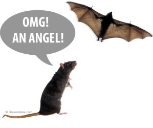 funny rat meme