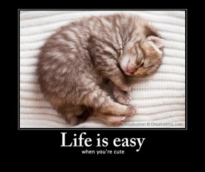 cute cat meme