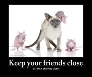 cat mouse friendship quotes