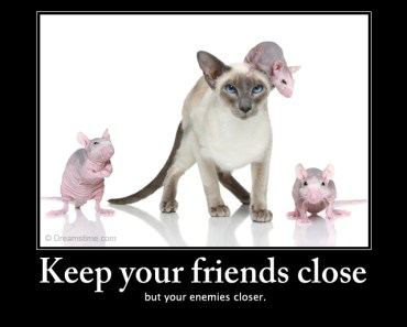 cat mouse friendship quotes