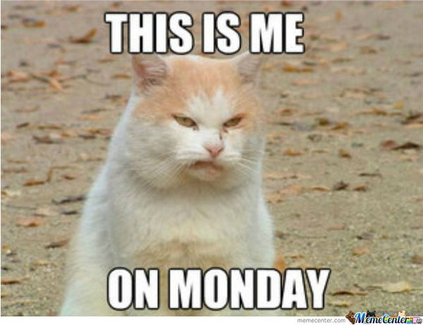 Funny It's Monday Pics And Images