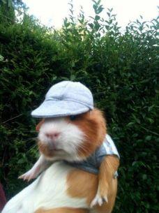golf guinea