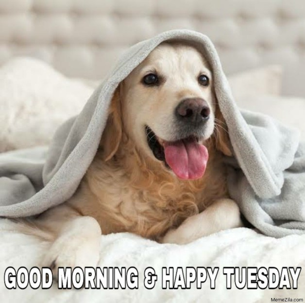 Good morning and happy tuesday meme - MemeZila.com