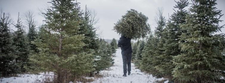 to-kill-a-christmas-tree-9