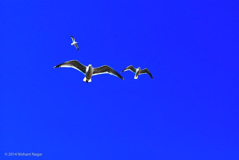 Birds flying over Brighton beach, UK