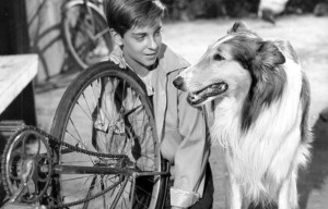 Hollywood Dog Training School – The home of Rin-Tin-Tin, Toto and Lassie in Los Angeles