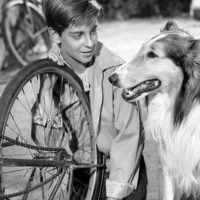 Hollywood Dog Training School - The home of Rin-Tin-Tin, Toto and Lassie in Los Angeles