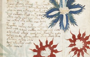 Voynich manuscript – The mysterious document of the many hypotheses in New Haven