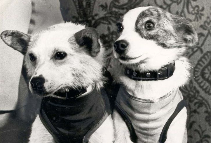 Belka and Strelka – The Soviet Space Dogs resting at the Museum of Cosmonautics