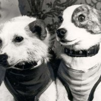 Belka and Strelka - The Soviet Space Dogs resting at the Museum of Cosmonautics